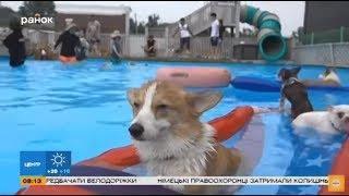 Животные и жара. Как сделать лето комфортным