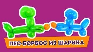 Как сделать из воздушного шарика собачку из мультфильма.