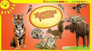 Животные России. Название животных и их среда обитания. Познавательное видео для детей и взрослых