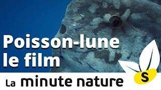 POISSON LUNE, LE FILM (No 101)