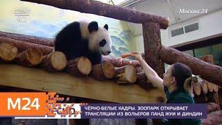 Московский зоопарк запускает онлайн-трансляцию жизни больших панд - Москва 24