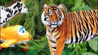 ТИГР ЗАПУТАЛСЯ В ЛИАНАХ! Кто ему поможет? Кто такой смелый? Мультфильмы про животных для детей