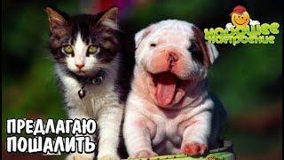 Приколы 2019 с Кошками и Собаками.Смешное видео с животными.Юмор.Улыбка до Ушей.