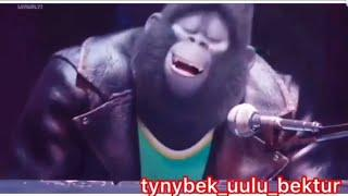Кыргызча ырлар 100%юмор