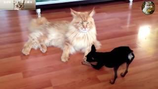 Кошки против собак - лучший юмор | new crazy animals 78