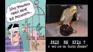 Про попугаев. Смешные попугаи. Карикатуры смешные картинки юмор приколы фото.