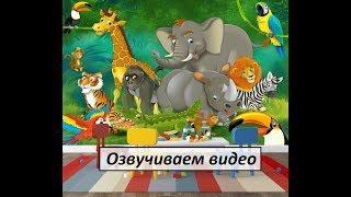Смешные и забавные животные/ Милые братья наши меньшие /Юмор и смех Funny and funny animals