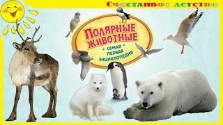 Полярные животные. Название животных и их среда обитания. Познавательное видео для детей и взрослых
