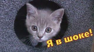 Как сделать дом для кота!!!