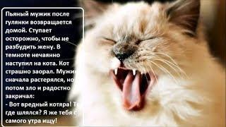 УМОРИТЕЛЬНАЯ подборка КЛАССНЫХ анекдотов про КОТОВ. Юмор в картинках. Выпуск 14.