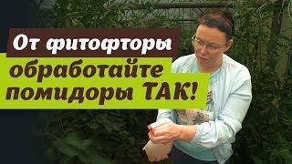 Как сделать молочную сыворотку от фитофторы. Очень простой рецепт