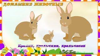 Учим животных:  кролик, крольчиха, крольчонок! Развивающие мультфильмы о животных