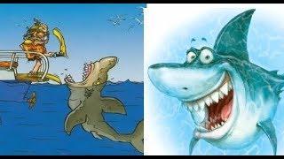 Про акулу. Веселая акула. Карикатуры веселые картинки. Юмор.