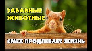Забавные животные.Смешное видео.Юмор.Приколы.Смех продлевает Жизнь.