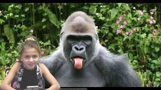 Познавательное шоу про обезьян! -  Интересные факты, о которых вы не знали!ШИМПАНЗЕ, НОСАЧИ..