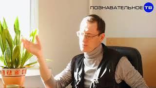 Как учат в англиискои школе Познавательное ТВ, Василий Колокольцов