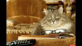 Записки кота плинтуса.  Отрывок из  рассказа.  Юмор:)