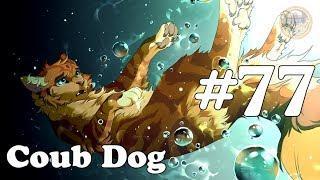 Coub Dog#77(лучшие приколы за Июнь 2018)