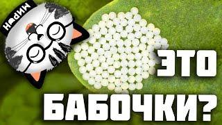 Интересные факты о Бабочках   Анимация