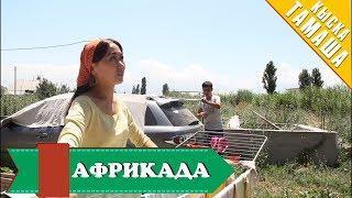 Нурбек Юлдашев/Кыска тамаша/АФРИКАДА/