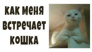 Видосы крышесносы. Как меня встречает кошка | мемы, юмор, приколы, лютые мемасы, озвучка мемов